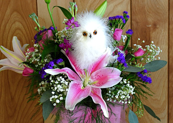 """Show Someone You """"Give a Hoot"""""""